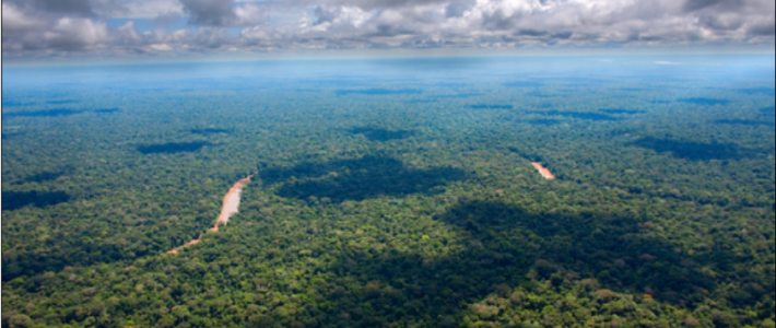 Indigenous Peoples and REDD+: A Critical Perspective